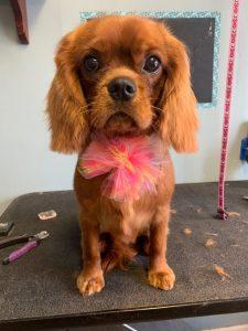 Paw Perfect Pet Salon